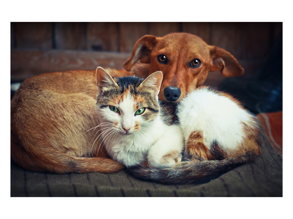 Colectomy in Cats and Dogs